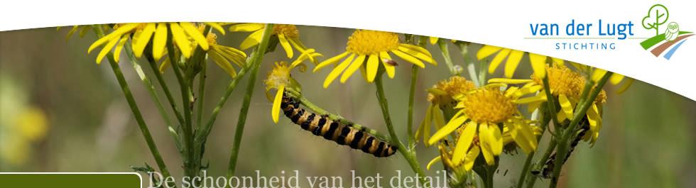 G.A. van der Lugt Stichting